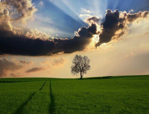 ISO 14001 em áreas rurais: a preservação ambiental como aliada