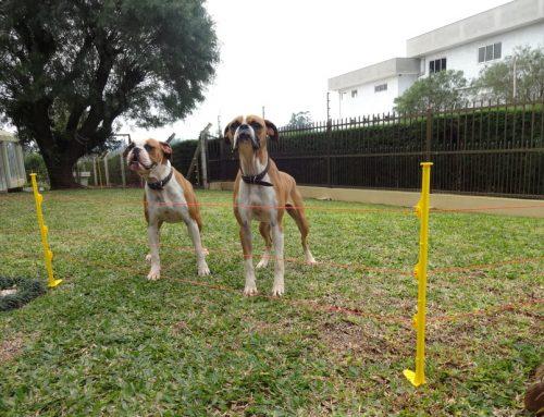 Kit Pet: conheça a cerca elétrica para pequenos animais
