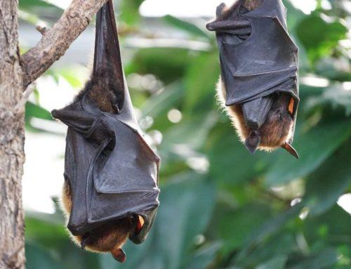 Saiba como espantar os morcegos da sua propriedade